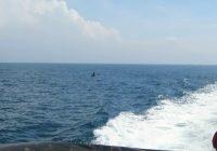 Ngư dân Việt lại kêu đau